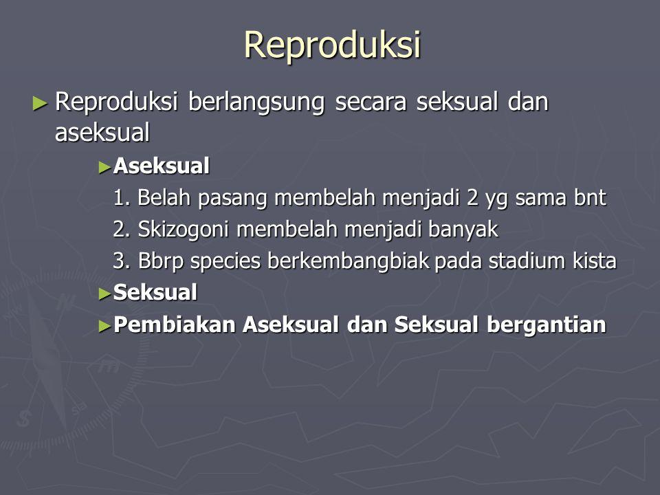 Reproduksi ► Reproduksi berlangsung secara seksual dan aseksual ► Aseksual 1. Belah pasang membelah menjadi 2 yg sama bnt 2. Skizogoni membelah menjad