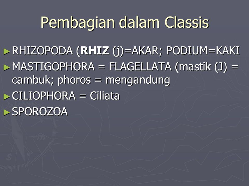 Pembagian dalam Classis ► RHIZOPODA (RHIZ (j)=AKAR; PODIUM=KAKI ► MASTIGOPHORA = FLAGELLATA (mastik (J) = cambuk; phoros = mengandung ► CILIOPHORA = C