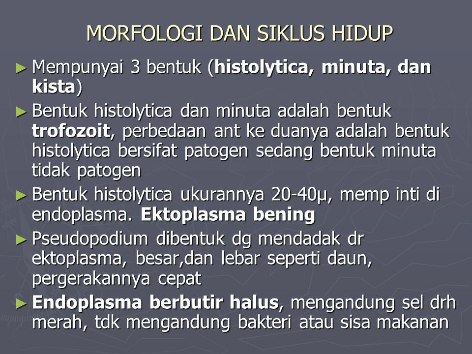 MORFOLOGI DAN SIKLUS HIDUP ► Mempunyai 3 bentuk (histolytica, minuta, dan kista) ► Bentuk histolytica dan minuta adalah bentuk trofozoit, perbedaan an