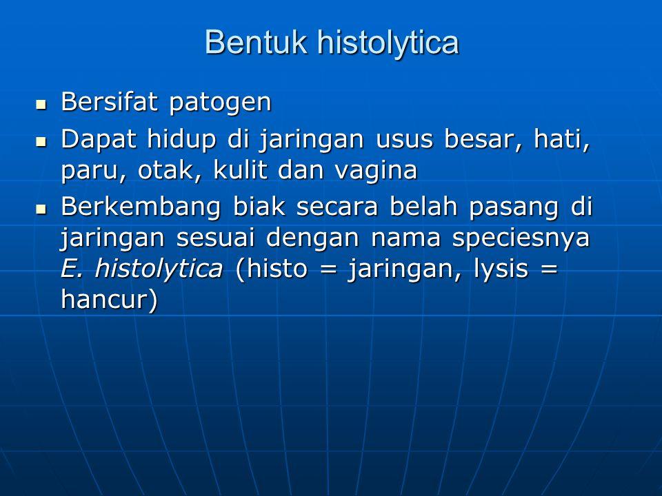 Bentuk histolytica Bersifat patogen Bersifat patogen Dapat hidup di jaringan usus besar, hati, paru, otak, kulit dan vagina Dapat hidup di jaringan us