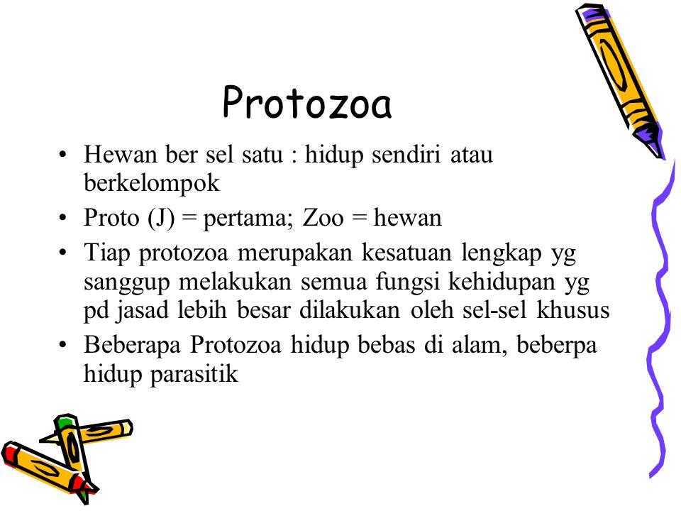 Protozoa Hewan ber sel satu : hidup sendiri atau berkelompok Proto (J) = pertama; Zoo = hewan Tiap protozoa merupakan kesatuan lengkap yg sanggup mela