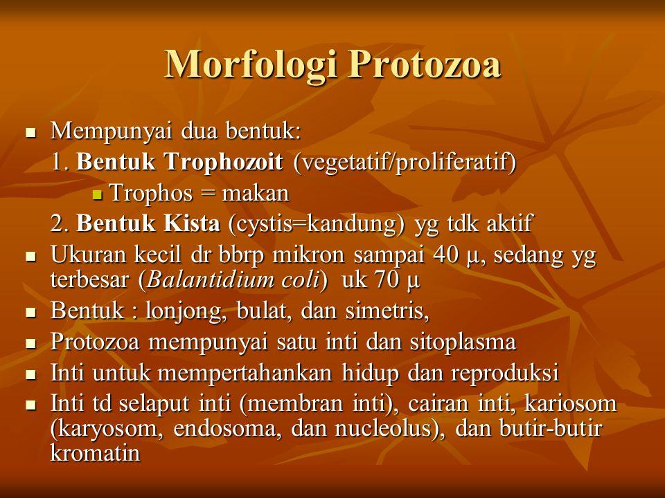 Morfologi Protozoa Mempunyai dua bentuk: Mempunyai dua bentuk: 1. Bentuk Trophozoit (vegetatif/proliferatif) Trophos = makan Trophos = makan 2. Bentuk