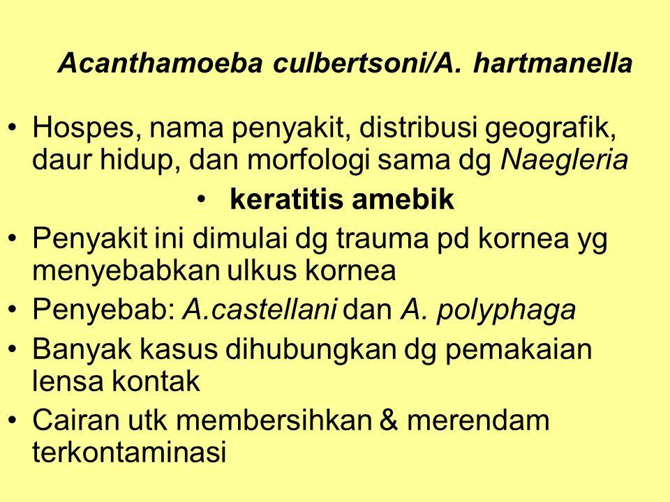 Acanthamoeba culbertsoni/A. hartmanella Hospes, nama penyakit, distribusi geografik, daur hidup, dan morfologi sama dg Naegleria keratitis amebik Peny