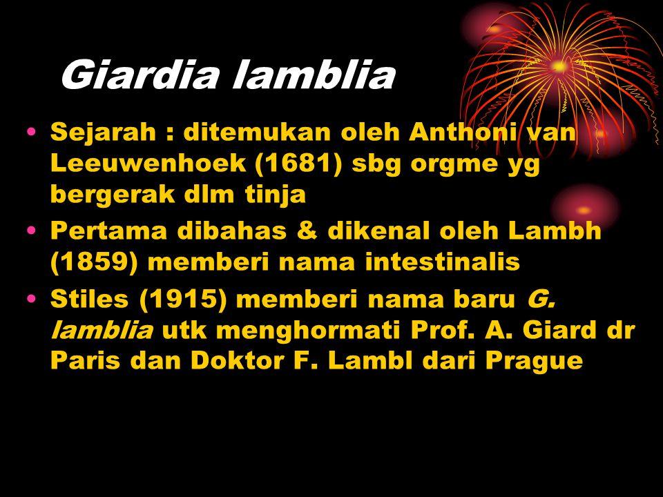 Giardia lamblia Sejarah : ditemukan oleh Anthoni van Leeuwenhoek (1681) sbg orgme yg bergerak dlm tinja Pertama dibahas & dikenal oleh Lambh (1859) me