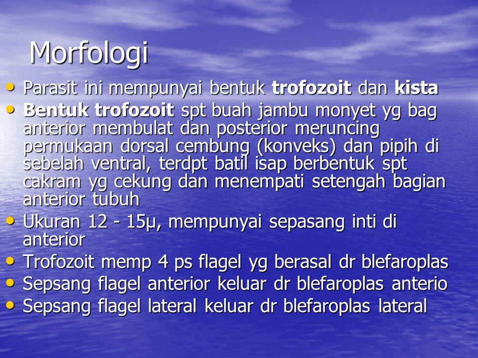 Morfologi Parasit ini mempunyai bentuk trofozoit dan kista Parasit ini mempunyai bentuk trofozoit dan kista Bentuk trofozoit spt buah jambu monyet yg
