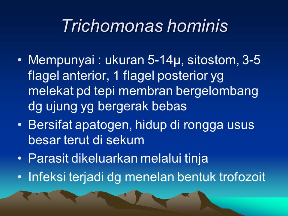 Trichomonas hominis Mempunyai : ukuran 5-14µ, sitostom, 3-5 flagel anterior, 1 flagel posterior yg melekat pd tepi membran bergelombang dg ujung yg be