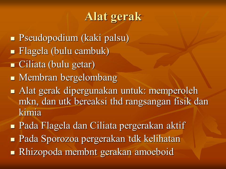 Alat gerak Pseudopodium (kaki palsu) Pseudopodium (kaki palsu) Flagela (bulu cambuk) Flagela (bulu cambuk) Ciliata (bulu getar) Ciliata (bulu getar) M