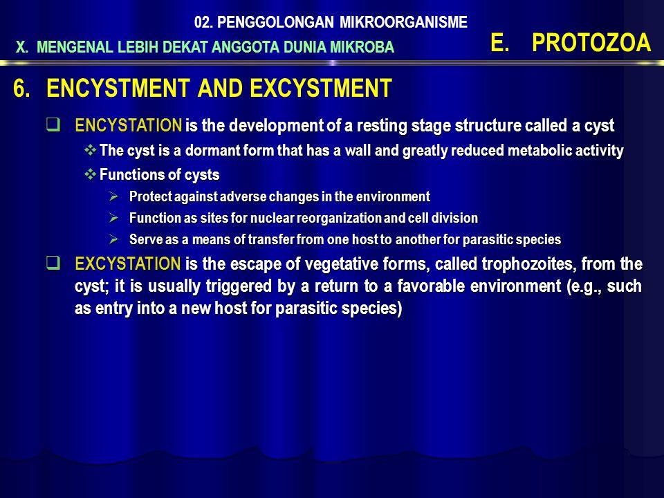 X. MENGENAL LEBIH DEKAT ANGGOTA DUNIA MIKROBA 02. PENGGOLONGAN MIKROORGANISME E.PROTOZOA  ENCYSTATION is the development of a resting stage structure