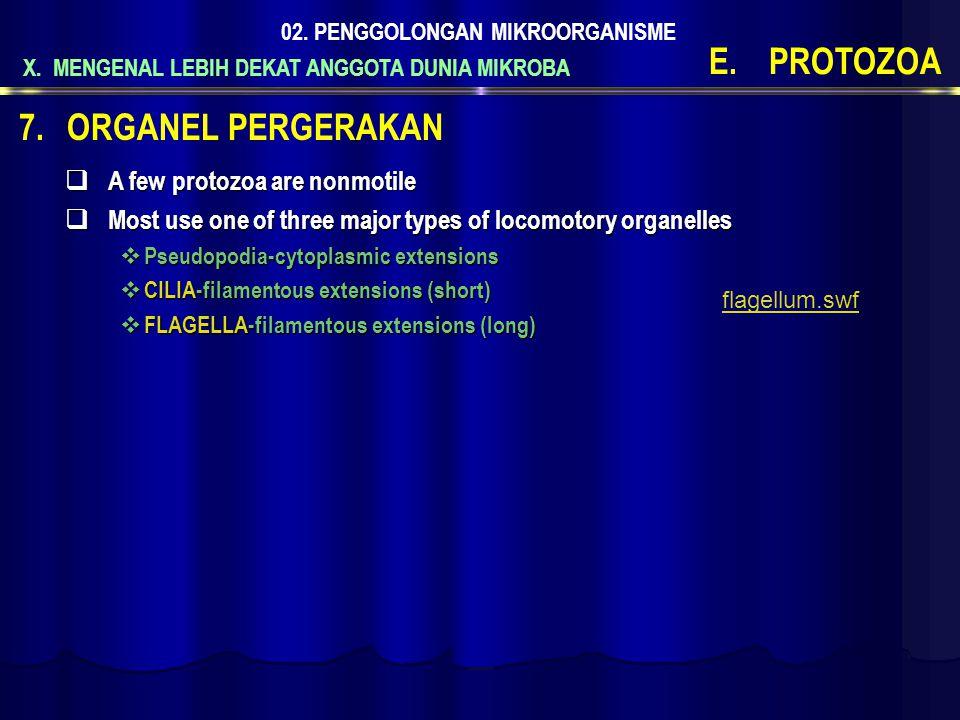 X. MENGENAL LEBIH DEKAT ANGGOTA DUNIA MIKROBA 02. PENGGOLONGAN MIKROORGANISME E.PROTOZOA  A few protozoa are nonmotile  Most use one of three major