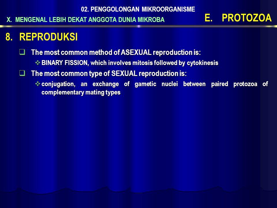 X. MENGENAL LEBIH DEKAT ANGGOTA DUNIA MIKROBA 02. PENGGOLONGAN MIKROORGANISME E.PROTOZOA  The most common method of ASEXUAL reproduction is:  BINARY