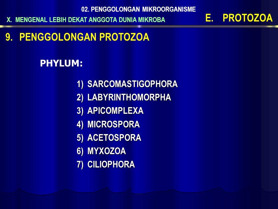 X. MENGENAL LEBIH DEKAT ANGGOTA DUNIA MIKROBA 02. PENGGOLONGAN MIKROORGANISME E.PROTOZOA 1)S ARCOMASTIGOPHORA 2)L ABYRINTHOMORPHA 3)A PICOMPLEXA 4)M I