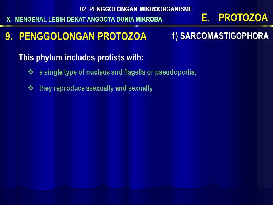 X. MENGENAL LEBIH DEKAT ANGGOTA DUNIA MIKROBA 02. PENGGOLONGAN MIKROORGANISME E.PROTOZOA 1) SARCOMASTIGOPHORA 9.PENGGOLONGAN PROTOZOA This phylum incl