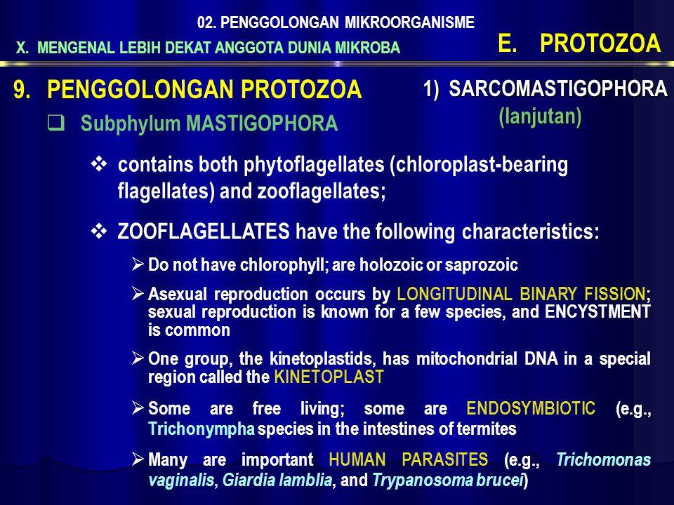 X. MENGENAL LEBIH DEKAT ANGGOTA DUNIA MIKROBA 02. PENGGOLONGAN MIKROORGANISME E.PROTOZOA 1) SARCOMASTIGOPHORA (lanjutan) 9.PENGGOLONGAN PROTOZOA  Sub