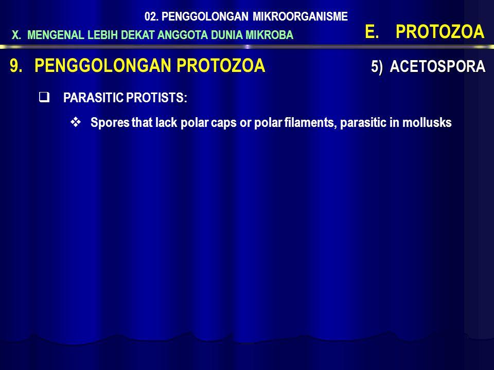 X. MENGENAL LEBIH DEKAT ANGGOTA DUNIA MIKROBA 02. PENGGOLONGAN MIKROORGANISME E.PROTOZOA 9.PENGGOLONGAN PROTOZOA 5) ACETOSPORA  PARASITIC PROTISTS: 