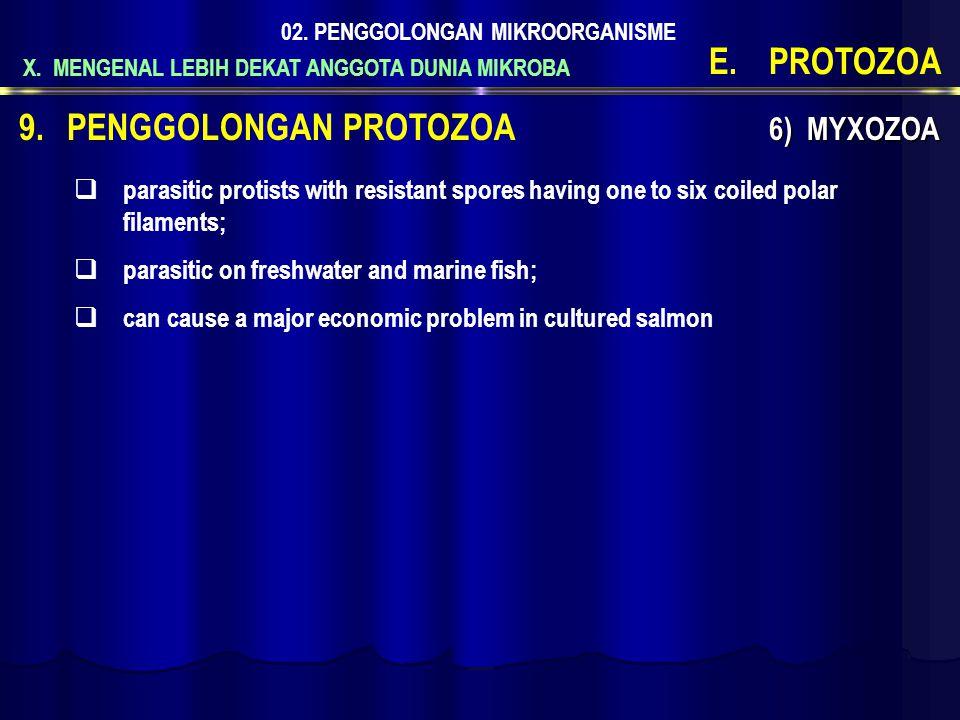 X. MENGENAL LEBIH DEKAT ANGGOTA DUNIA MIKROBA 02. PENGGOLONGAN MIKROORGANISME E.PROTOZOA 9.PENGGOLONGAN PROTOZOA 6) MYXOZOA  parasitic protists with