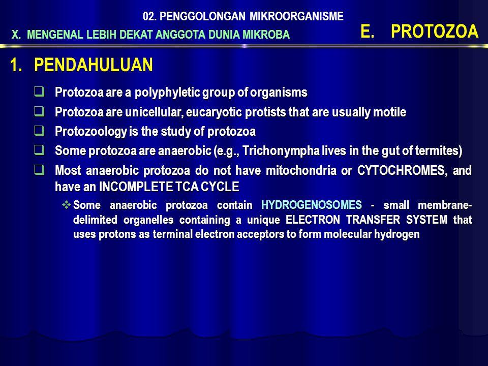 X. MENGENAL LEBIH DEKAT ANGGOTA DUNIA MIKROBA 02. PENGGOLONGAN MIKROORGANISME E.PROTOZOA  Protozoa are a polyphyletic group of organisms  Protozoa a