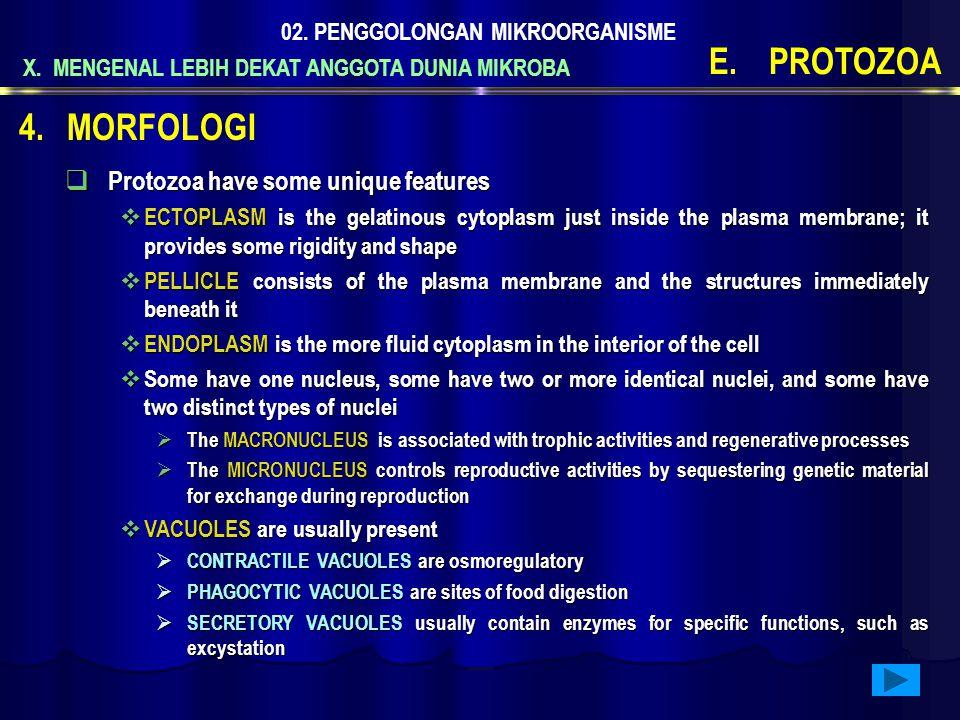 X. MENGENAL LEBIH DEKAT ANGGOTA DUNIA MIKROBA 02. PENGGOLONGAN MIKROORGANISME E.PROTOZOA  Protozoa have some unique features  ECTOPLASM is the gelat