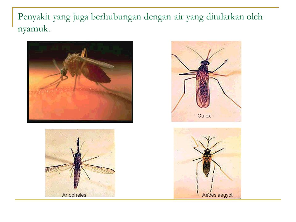 Penyakit yang juga berhubungan dengan air yang ditularkan oleh nyamuk. Aedes aegypti Culex Anopheles