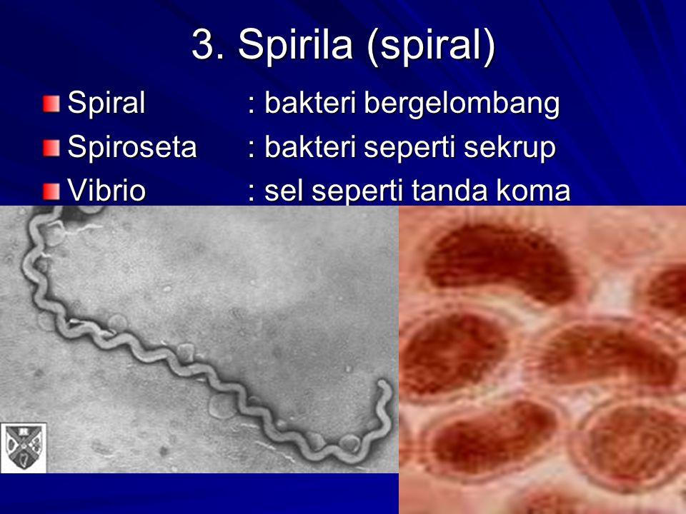 3. Spirila (spiral) Spiral: bakteri bergelombang Spiroseta: bakteri seperti sekrup Vibrio: sel seperti tanda koma