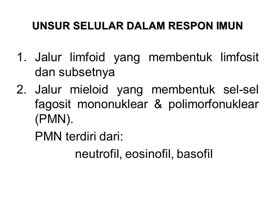 UNSUR SELULAR DALAM RESPON IMUN 1.Jalur limfoid yang membentuk limfosit dan subsetnya 2.Jalur mieloid yang membentuk sel-sel fagosit mononuklear & polimorfonuklear (PMN).
