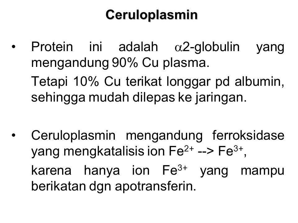 Ceruloplasmin Protein ini adalah  2-globulin yang mengandung 90% Cu plasma.