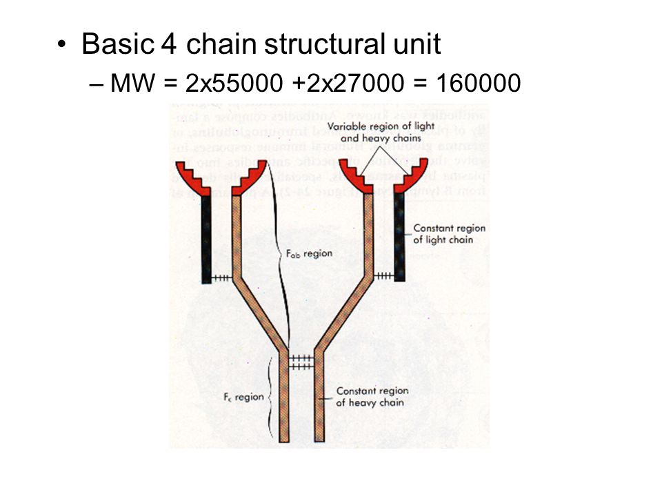 Basic 4 chain structural unit –MW = 2x55000 +2x27000 = 160000
