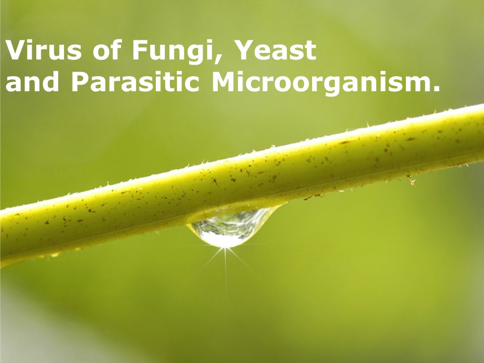 Page 1 Virus of Fungi, Yeast and Parasitic Microorganism.