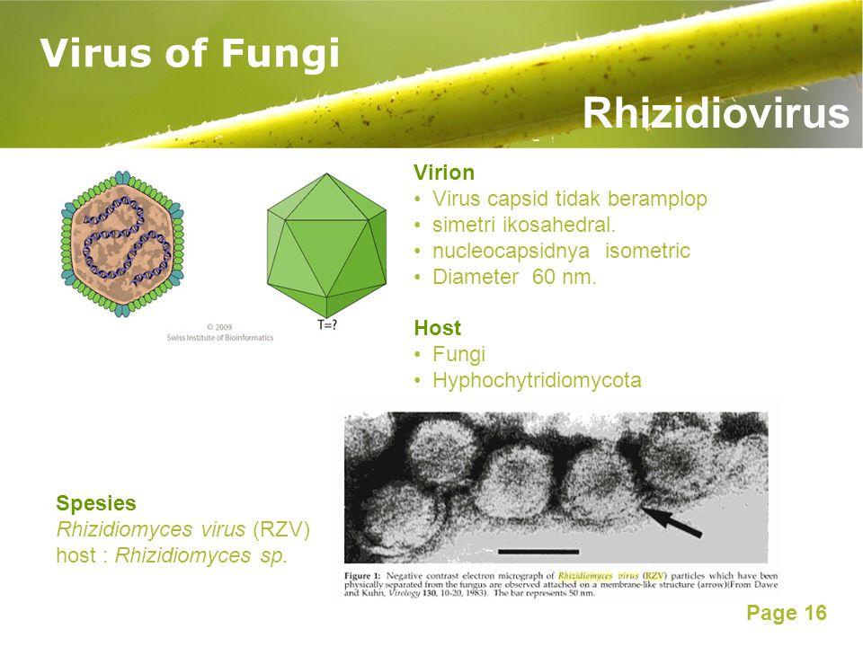 Page 16 Virus of Fungi Rhizidiovirus Virion Virus capsid tidak beramplop simetri ikosahedral. nucleocapsidnya isometric Diameter 60 nm. Host Fungi Hyp