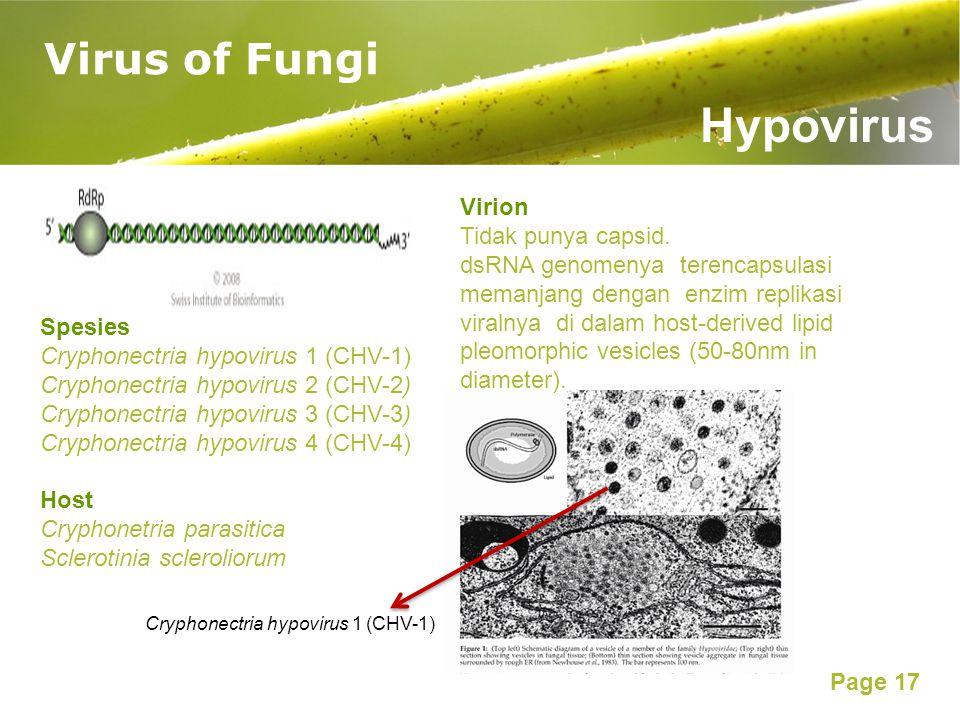Page 17 Virus of Fungi Hypovirus Virion Tidak punya capsid. dsRNA genomenya terencapsulasi memanjang dengan enzim replikasi viralnya di dalam host-der
