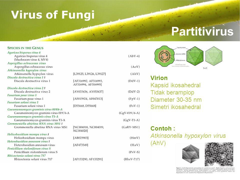 Page 18 Virus of Fungi Partitivirus Virion Kapsid ikosahedral Tidak beramplop Diameter 30-35 nm Simetri ikosahedral Contoh : Atkinsonella hypoxylon virus (AhV)