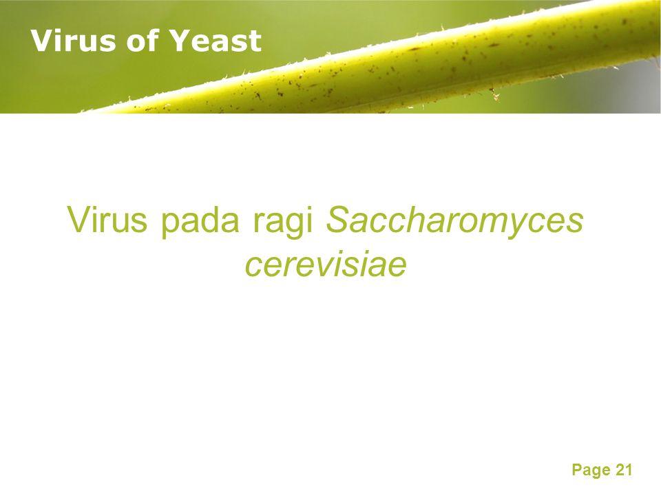 Page 21 Virus of Yeast Virus pada ragi Saccharomyces cerevisiae