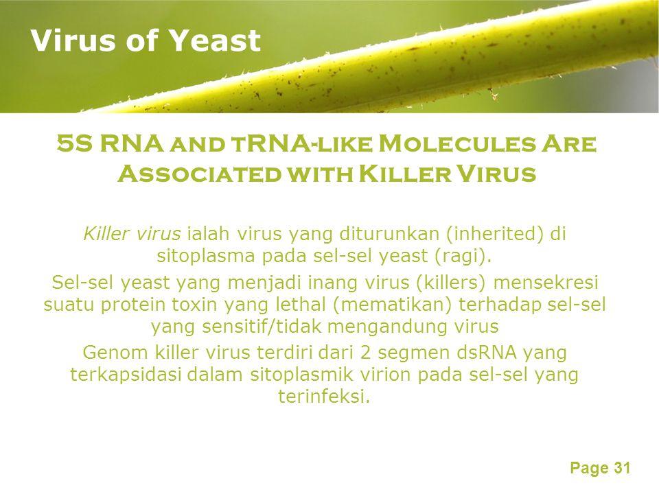 Page 31 5S RNA and tRNA-like Molecules Are Associated with Killer Virus Killer virus ialah virus yang diturunkan (inherited) di sitoplasma pada sel-sel yeast (ragi).