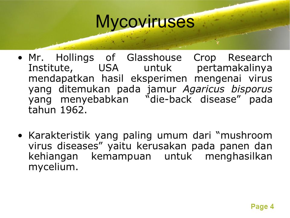 Page 5 Morphology of Mycoviruses Bacilliform, rod-shaped, filamentous and herpes types.