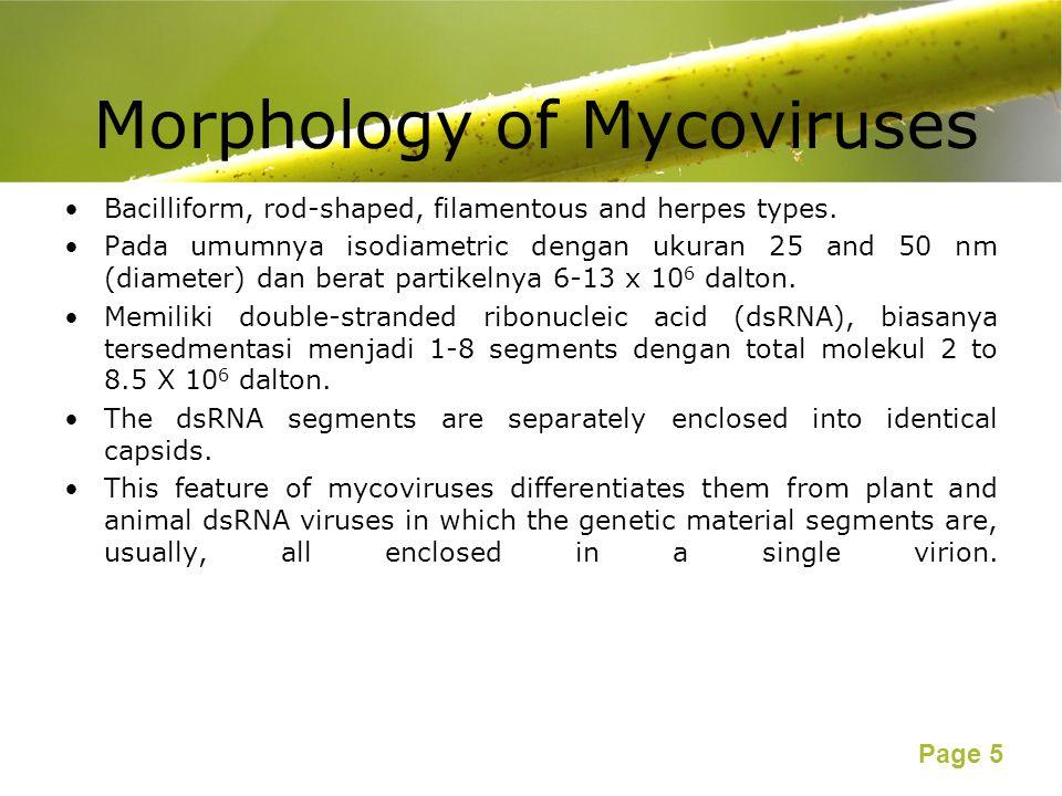 Page 5 Morphology of Mycoviruses Bacilliform, rod-shaped, filamentous and herpes types. Pada umumnya isodiametric dengan ukuran 25 and 50 nm (diameter