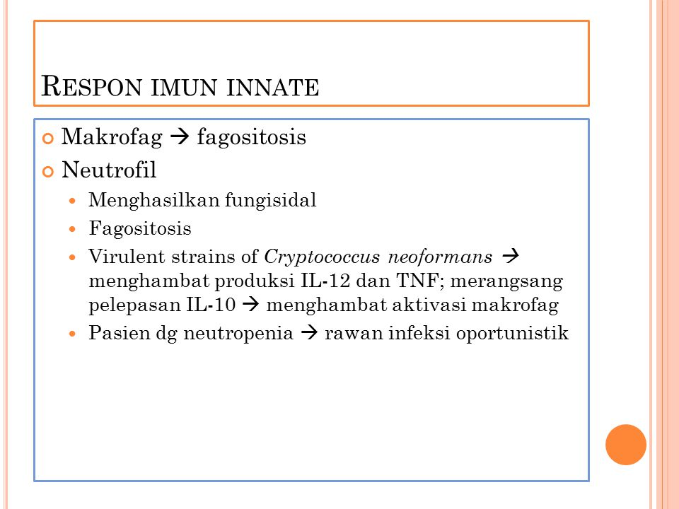 R ESPON IMUN INNATE Makrofag  fagositosis Neutrofil Menghasilkan fungisidal Fagositosis Virulent strains of Cryptococcus neoformans  menghambat prod