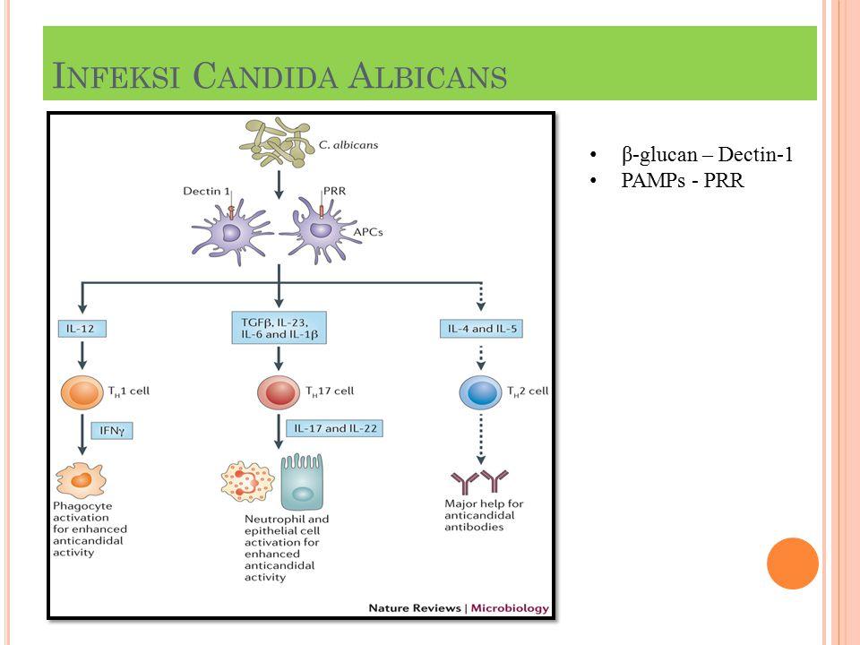 I NFEKSI C ANDIDA A LBICANS β-glucan – Dectin-1 PAMPs - PRR