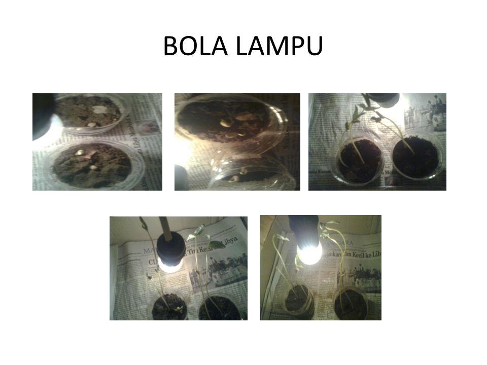 BOLA LAMPU