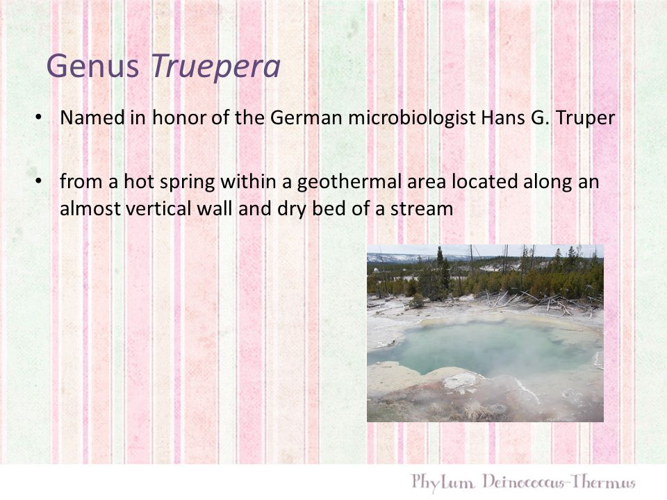 Genus Truepera Named in honor of the German microbiologist Hans G. Truper from a hot spring within a geothermal area located along an almost vertical