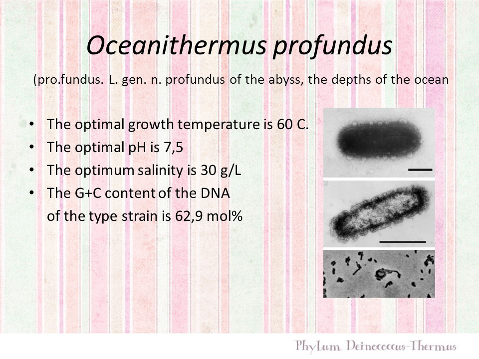 Oceanithermus profundus The optimal growth temperature is 60 C. The optimal pH is 7,5 The optimum salinity is 30 g/L The G+C content of the DNA of the