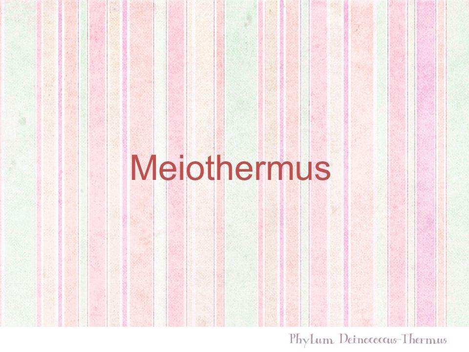 Meiothermus