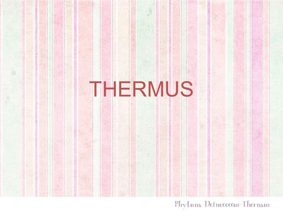 Ditemukan pada habitat thermal seperti thermal spring, hot tap water, dsb nama Thermus berasal dari bahasa Yunani, thermos, yang berarti panas