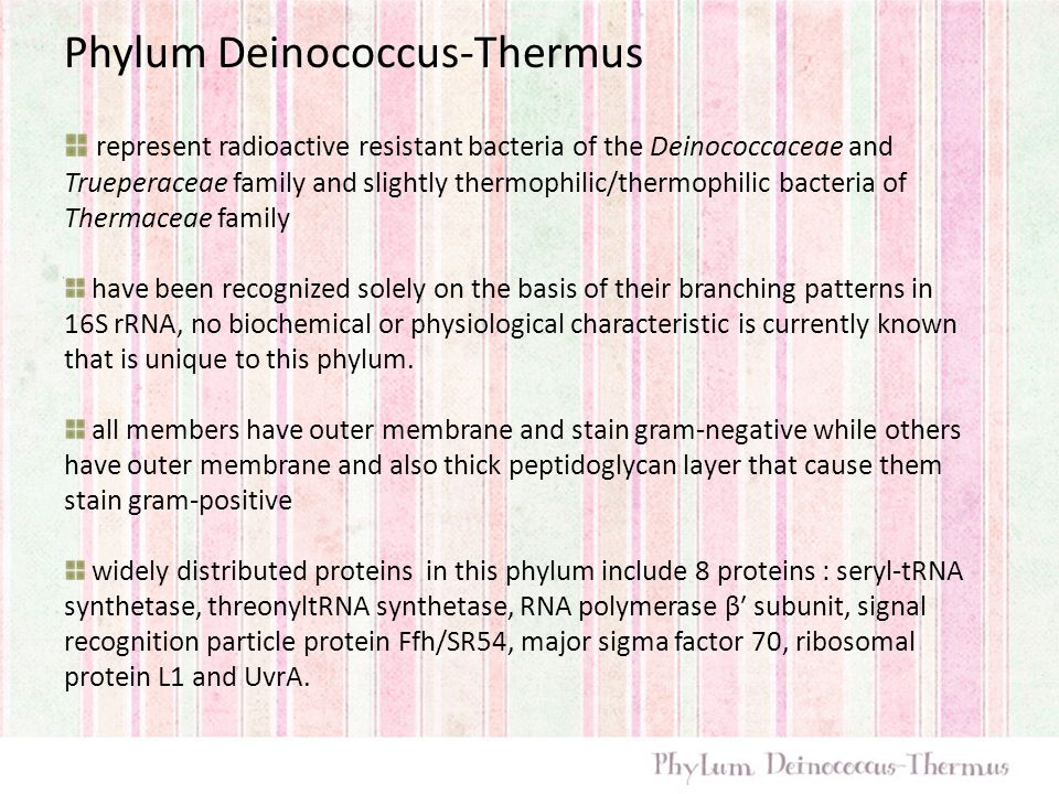 Phylum Deinococcus-Thermus represent radioactive resistant bacteria of the Deinococcaceae and Trueperaceae family and slightly thermophilic/thermophil