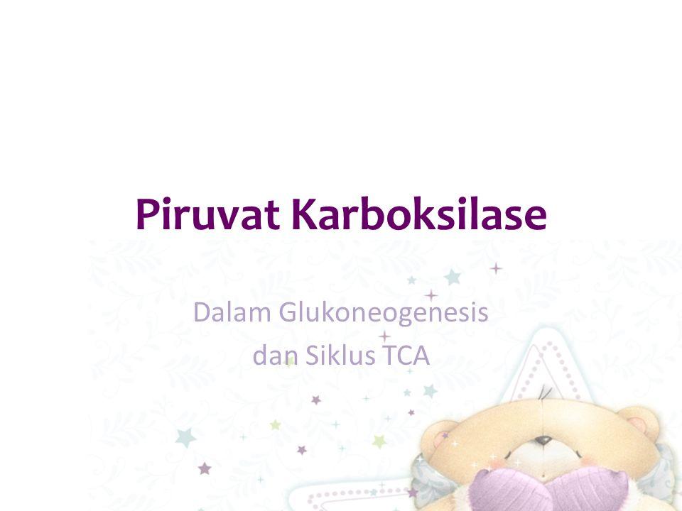 Piruvat Karboksilase Dalam Glukoneogenesis dan Siklus TCA