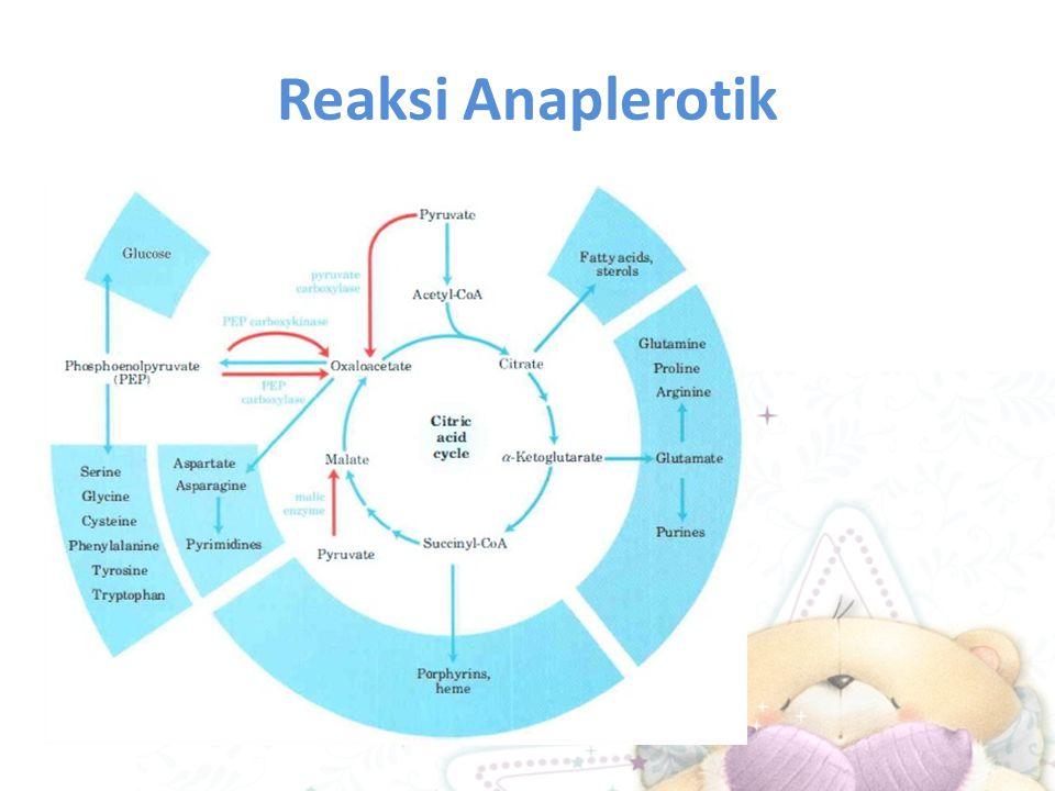 Reaksi Anaplerotik