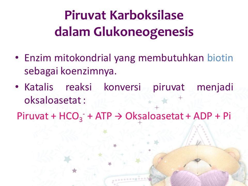 Piruvat Karboksilase dalam Glukoneogenesis Enzim mitokondrial yang membutuhkan biotin sebagai koenzimnya. Katalis reaksi konversi piruvat menjadi oksa