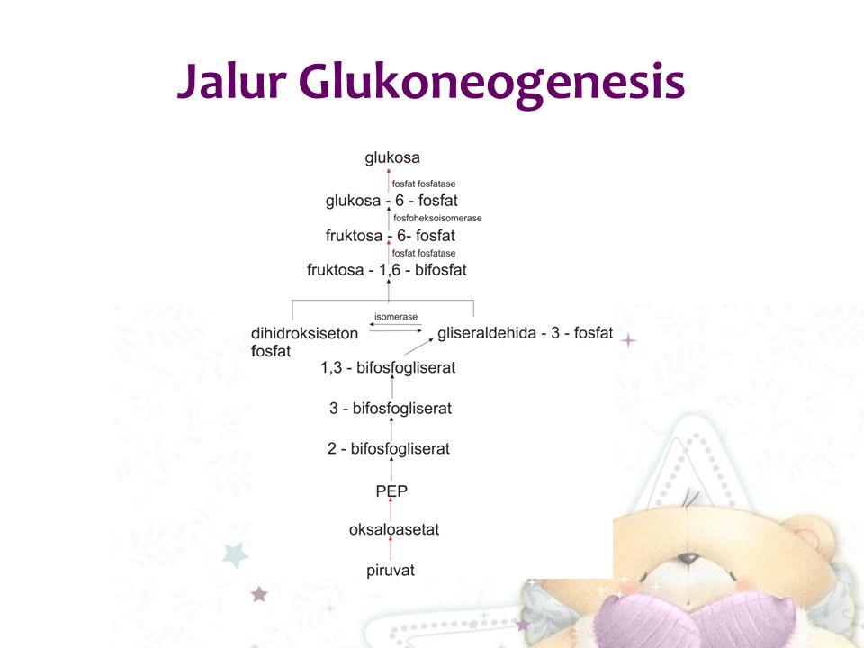 Jalur Glukoneogenesis