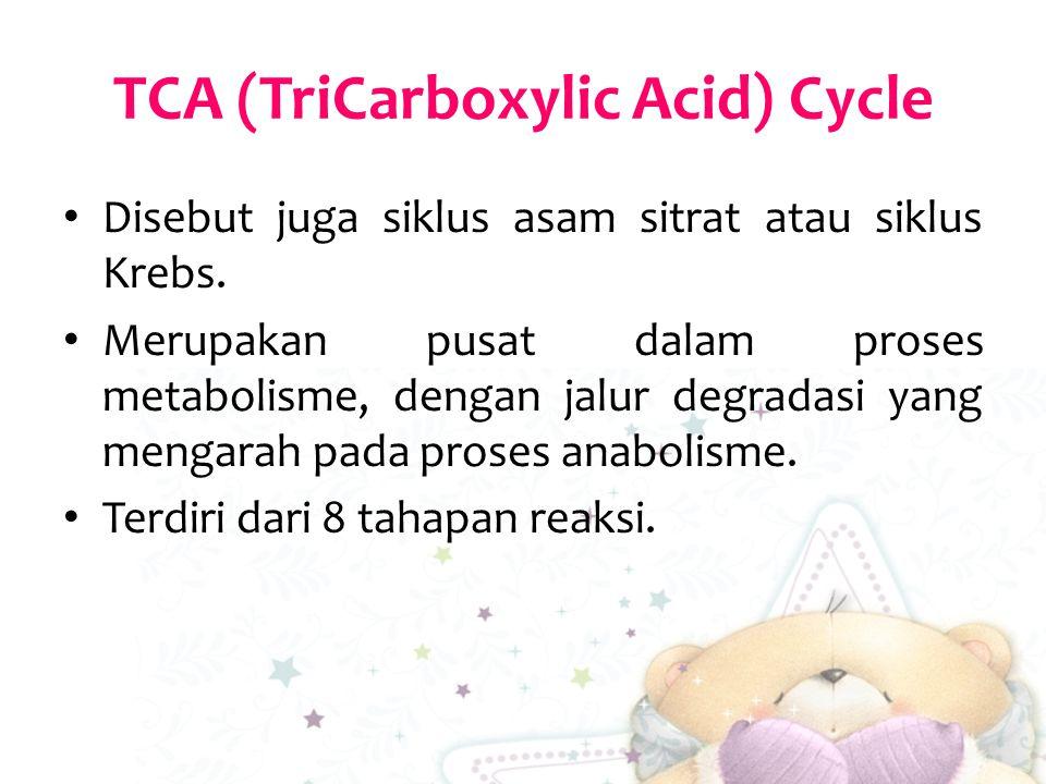 TCA (TriCarboxylic Acid) Cycle Disebut juga siklus asam sitrat atau siklus Krebs. Merupakan pusat dalam proses metabolisme, dengan jalur degradasi yan