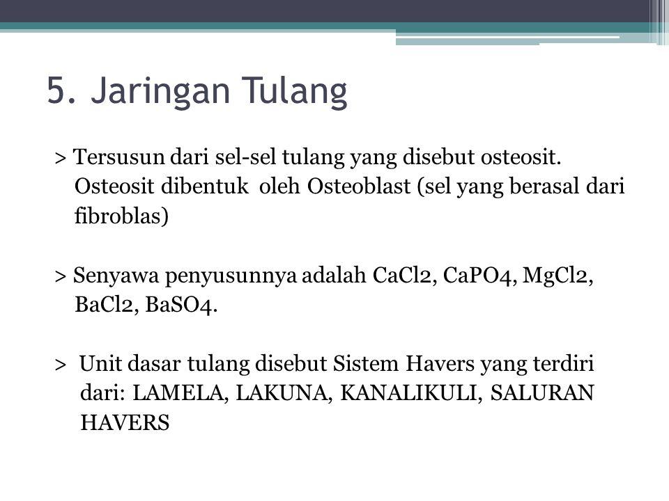 5. Jaringan Tulang > Tersusun dari sel-sel tulang yang disebut osteosit. Osteosit dibentuk oleh Osteoblast (sel yang berasal dari fibroblas) > Senyawa