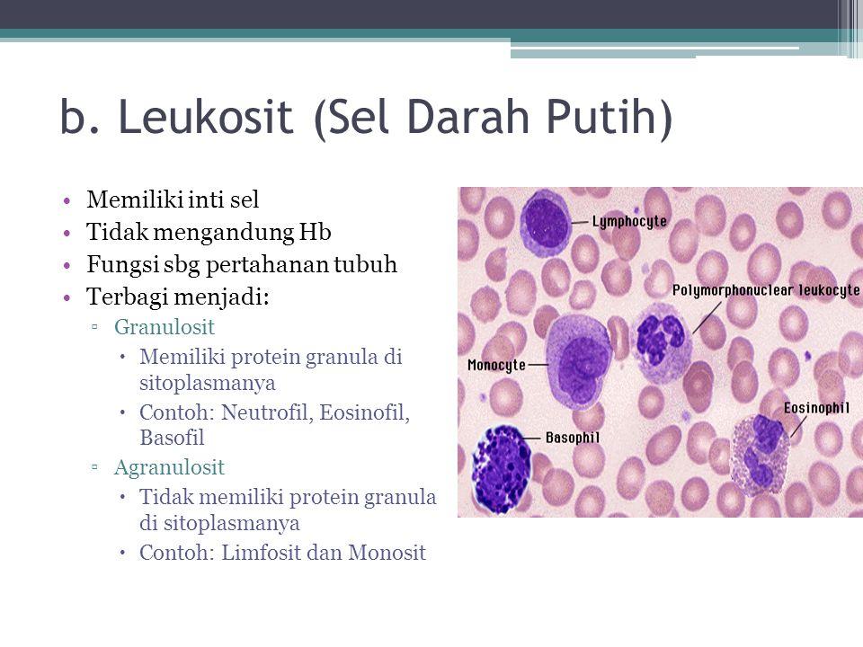 b. Leukosit (Sel Darah Putih) Memiliki inti sel Tidak mengandung Hb Fungsi sbg pertahanan tubuh Terbagi menjadi: ▫Granulosit  Memiliki protein granul