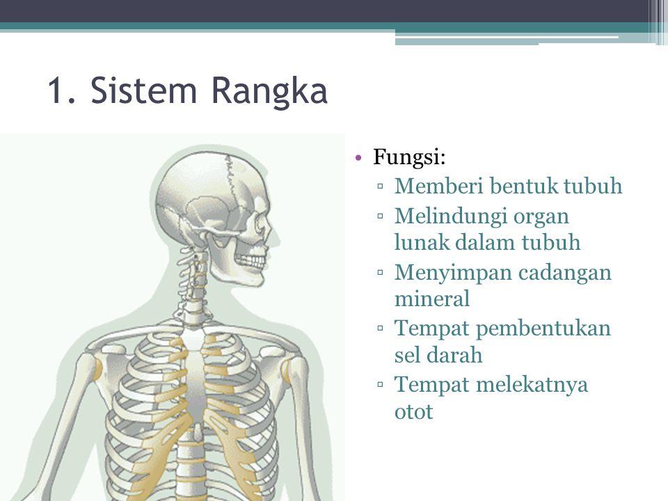 1. Sistem Rangka Fungsi: ▫Memberi bentuk tubuh ▫Melindungi organ lunak dalam tubuh ▫Menyimpan cadangan mineral ▫Tempat pembentukan sel darah ▫Tempat m